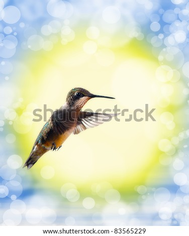 Dreamy image of a Hummingbird with sunrise