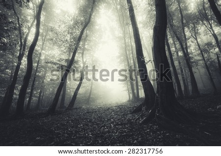 dreamy mood forest - stock photo