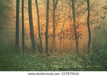 Dreamy orange vintage color foggy forest tree scene background. Color filter effect used. - stock photo