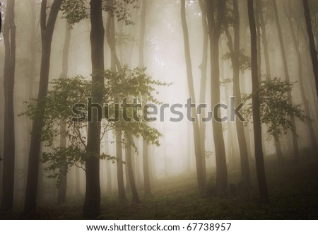 dreamy photo of a beautiful green forest with fog