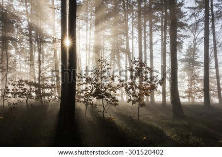 Dreamy scene created by rising sun beaming the rays through the morning haze with the lovely shadows. The sun star is captured between two trees creating the unique view. - stock photo