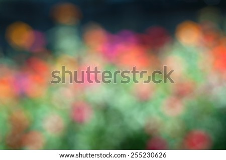 Dreamy Soft and Colorful Red, Orange, Pink Zinnia Flowers in a Sunny Garden. Dreamy Blurred to Use as a Backdrop or Background.  Horizontal multicolor palette of tones and hues - stock photo