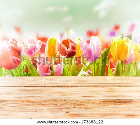 Dreamy spring background of colourful tulips behind a rustic wooden fence or tabletop with a soft blur effect and focus to three flowers in the front - stock photo