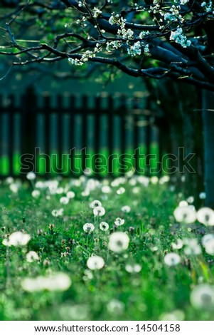 Dreamy spring backyard with trees and many dandelions - stock photo