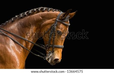 dressage, bay horse - isolated on black - stock photo