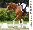 Dressage horse and rider - stock photo