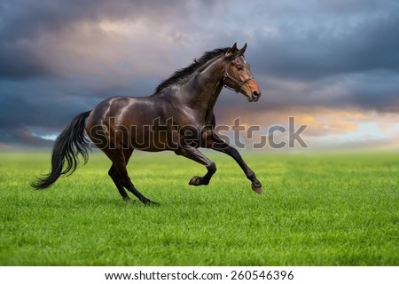 Dressage horse run on a grass against sunset sky