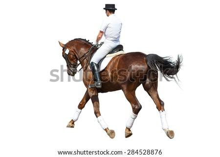 Dressage rider isolated on white background. - stock photo
