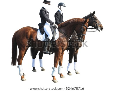 Dressage rider man and woman with two horses isolated on white background