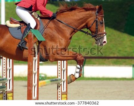 Dressage sport horse jumping obstacle  - stock photo