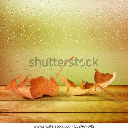 Dried autumn leaves lying on the background of the rainy window - stock photo