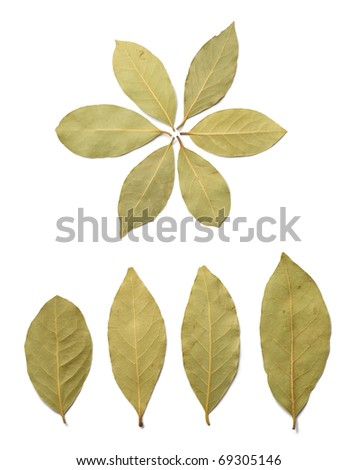 Dried bay leaves on the white background - stock photo