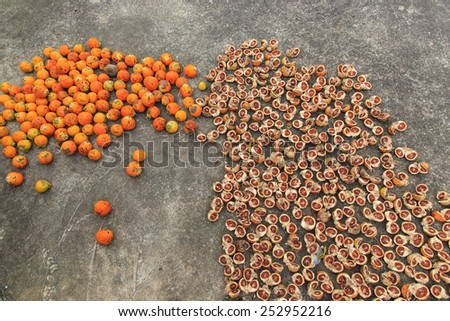 how to prepare dried betel nut