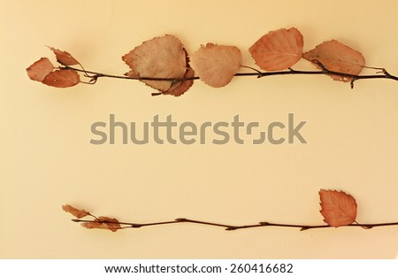 Dried birch tree branches - stock photo