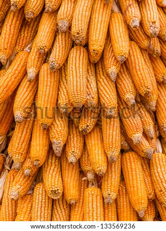 Dried corn - stock photo