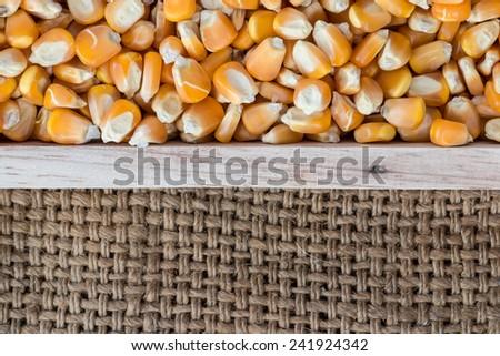 Dried corn seed in box wood burlap on sack - stock photo
