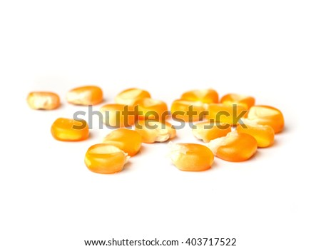Dried corn seed isolated on white background. - stock photo