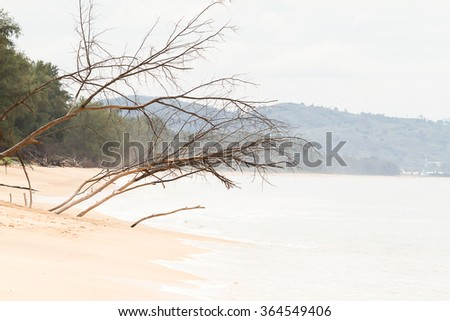 Dried dead trees on the beach with mountain background - stock photo