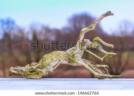 Dried driftwood stump - stock photo