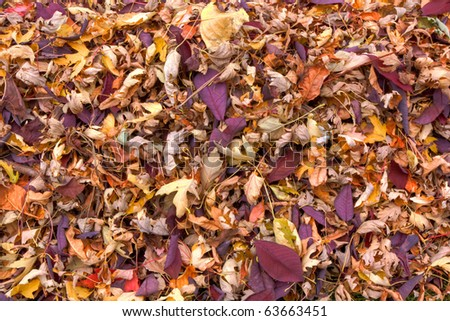 Dried Fall Leaves Background