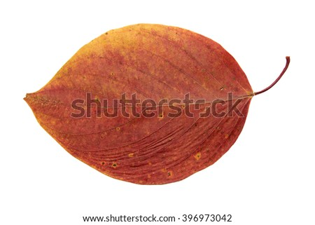 dried fall leaves of plants, flowers and branches, isolated elements on white  background for scrapbook, object, roughage autumn leaf. - stock photo