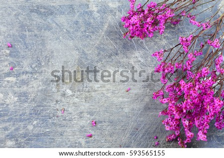 stock-photo-dried-flowers-called-broom-b