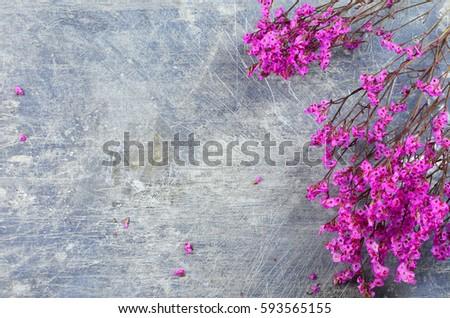 stock-photo-dried-flowers-called-broom-b