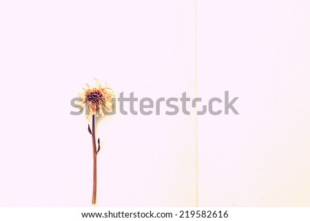 Dried flowers on mulberry paper, Vintage color