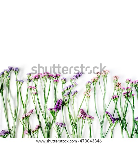 dried flowers on white background. autumn flat lay wallpaper, top view