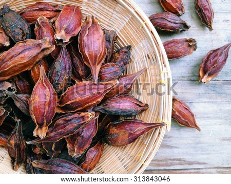 Dried Gardenia Fruit, As the herbs in the treatments of Chinese medicine. - stock photo