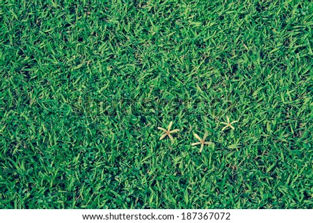 Dried Grass Background - stock photo