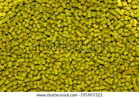 Dried hops - stock photo
