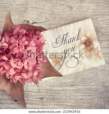 dried hydrangea flowers - stock photo