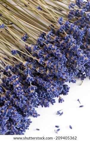 Dried lavender on the white background - stock photo