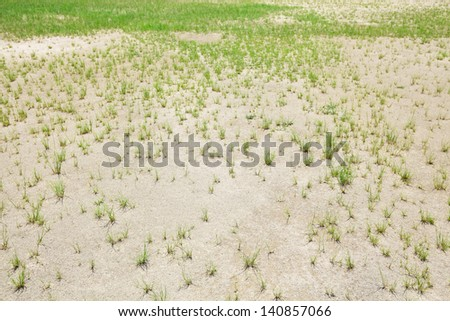 Dried lawn - stock photo