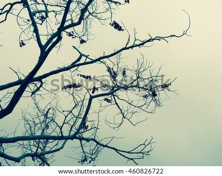 Dried nature silhouette tree branch on sky abstract background. Vintage tone filter color style.