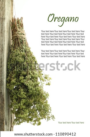 Dried oregano hanging from a rope with copy space - stock photo
