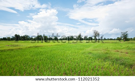 Dried out rice field in Banteay Meanchey Province, Cambodia