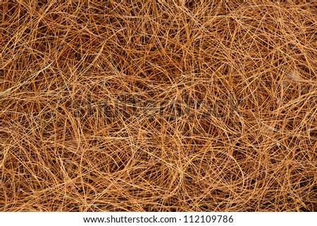 dried pine leaves needles brown pattern background texture - stock photo