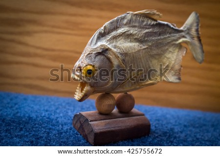 Dried preserved piranha fish trophy on blue surface  - stock photo