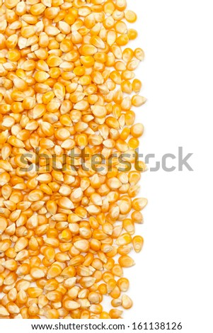 Dried raw corn kernels border on white background - stock photo