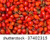 Dried red hips, natural background - stock photo