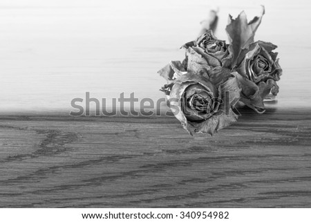 Dried rose  black and white - stock photo