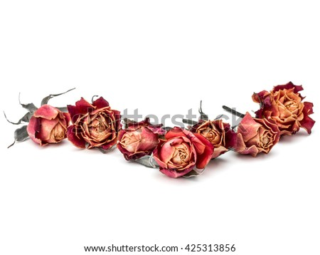 dried rose flower head isolated on white background cutout - stock photo
