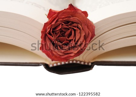 dried rose on opened book - stock photo