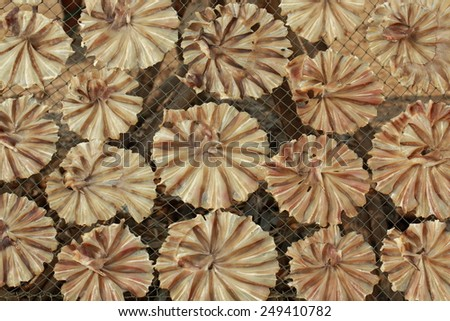 Dried Small fish used in Asian cuisine, Fish drying. - stock photo