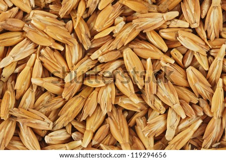 Dried spelt - stock photo