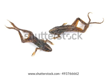 Dried toads isolated on white background.