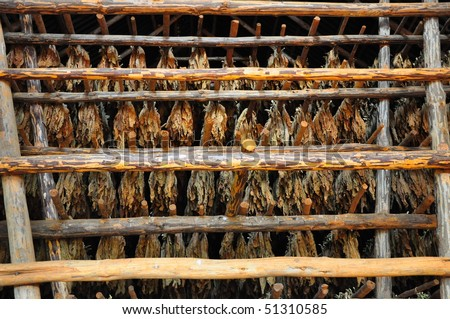 Dried tobacco leaves hanging in racks - stock photo