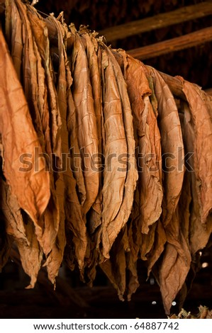 Dried tobacco leaves in the store - stock photo